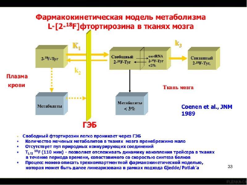 Математическое моделирование биофизических процессов, слайд 19