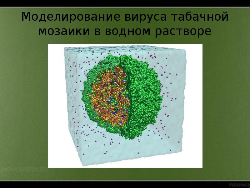 Моделирование вируса табачной мозаики в водном растворе
