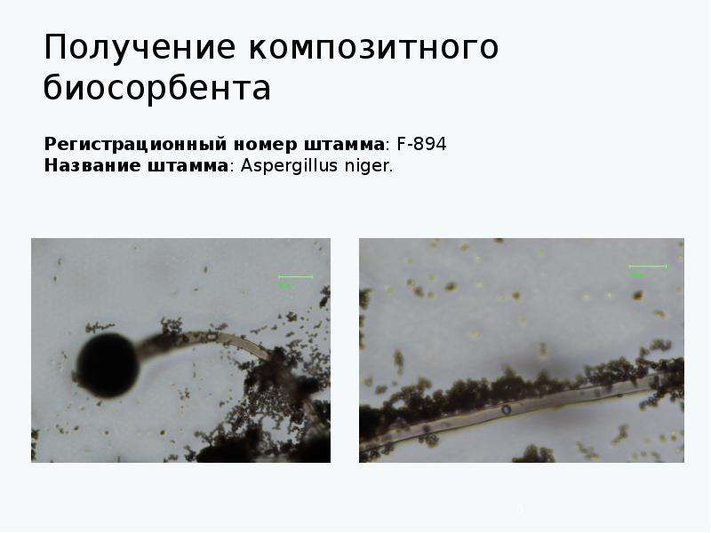 Получение композитного биосорбента