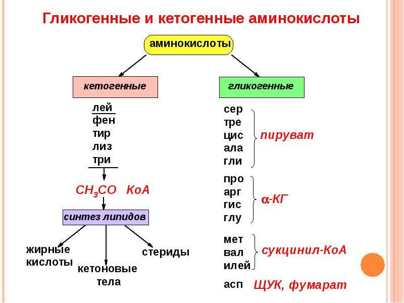 Гликогенные и кетогенные аминокислоты