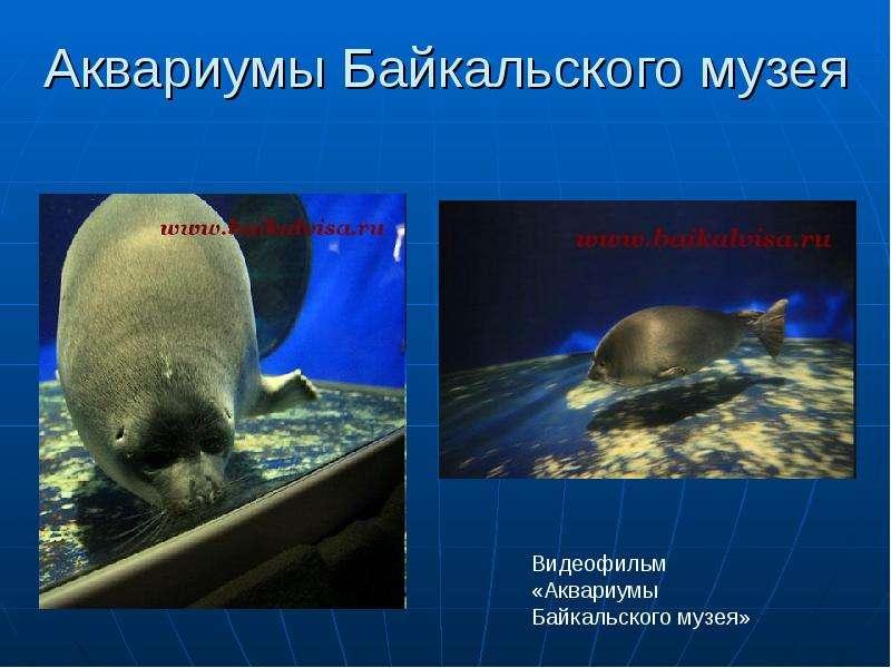 Аквариумы Байкальского музея