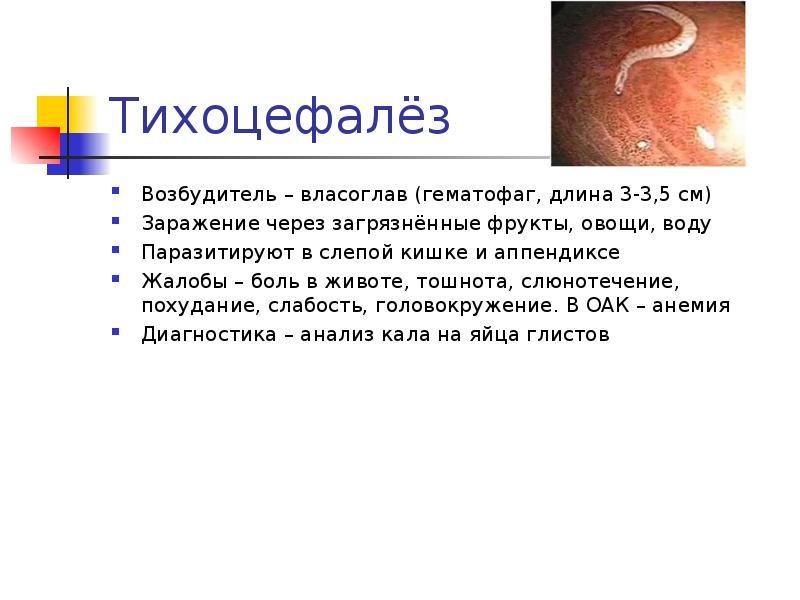 Тихоцефалёз Возбудитель – власоглав (гематофаг, длина 3-3,5 см) Заражение через загрязнённые фрукты,