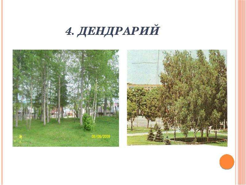 4. Дендрарий