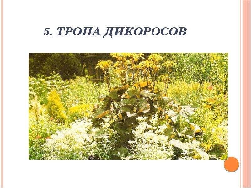 5. Тропа дикоросов
