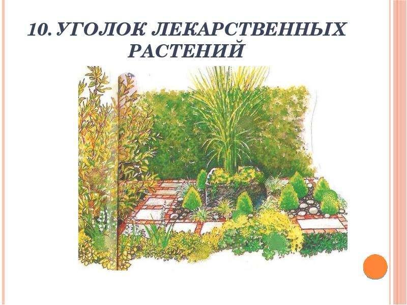 10. Уголок лекарственных растений