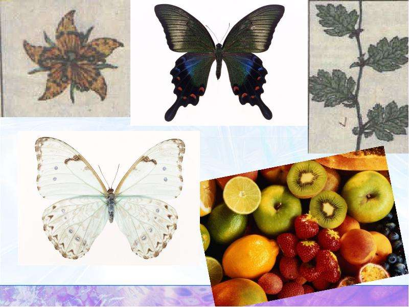 Осевая и центральная симметрия. Симметрия в природе, слайд 8