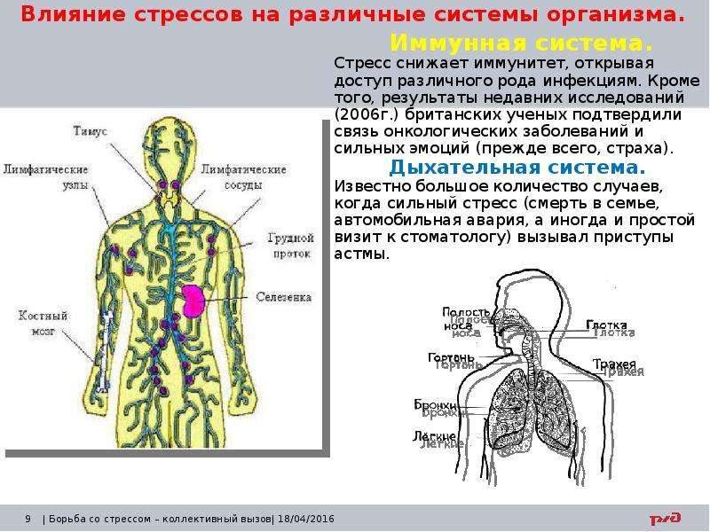 Влияние стрессов на различные системы организма. Иммунная система. Стресс снижает иммунитет, открыва