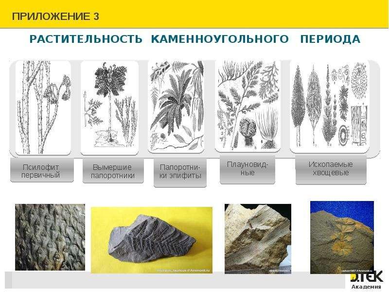 Растительность каменноугольного периода