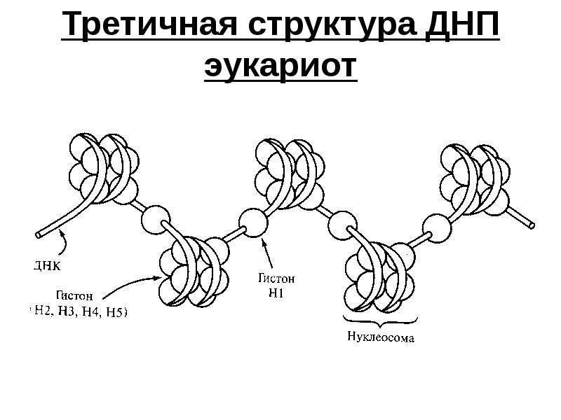 что третичная структура днк картинки черешок был