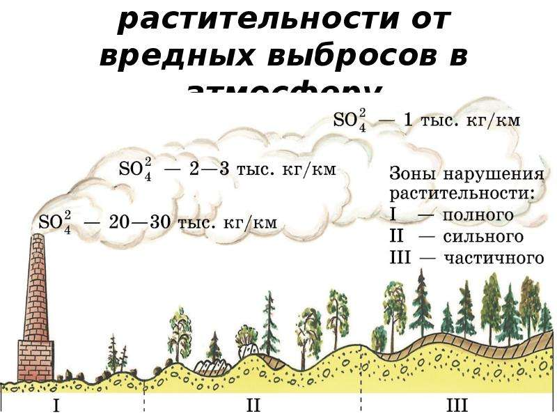 Нарушение растительности от вредных выбросов в атмосферу
