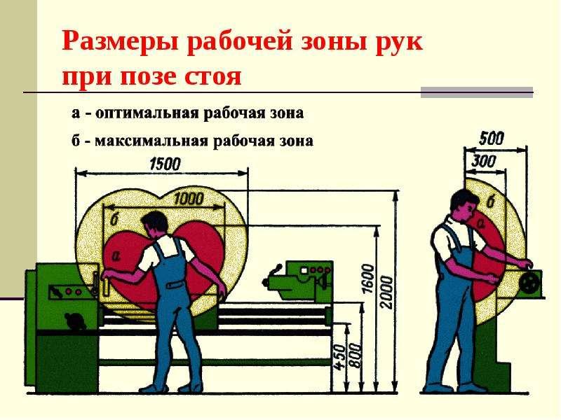 Размеры рабочей зоны рук при позе стоя