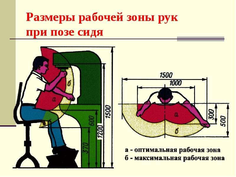 Размеры рабочей зоны рук при позе сидя