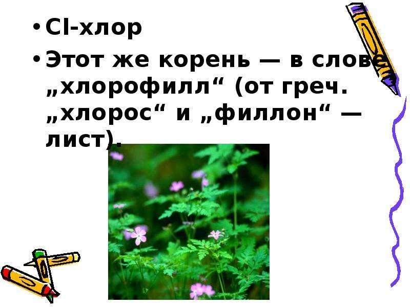 """Сl-хлор Сl-хлор Этот же корень — в слове """"хлорофилл"""" (от греч. """"хлорос"""" и """"филлон"""" — лист)."""