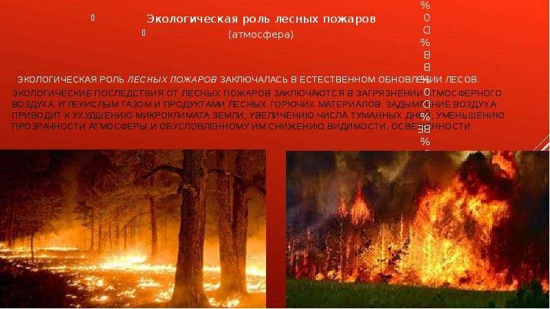 Экологическая роль лесных пожаров заключалась в естественном обновлении лесов. Экологические последс