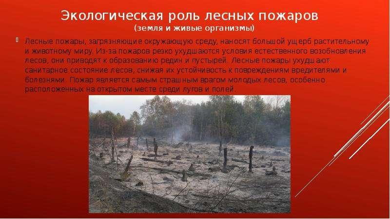 Экологическая роль лесных пожаров (земля и живые организмы) Лесные пожары, загрязняющие окружающую с