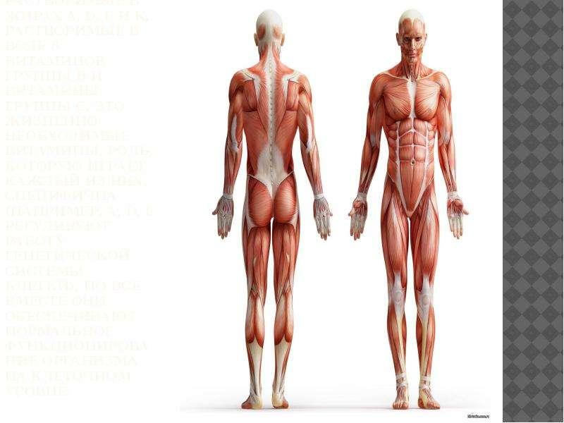 Человеческому организму необходимо 13 витаминов. Растворимые в жирах А, D, E и K, растворимые в вод