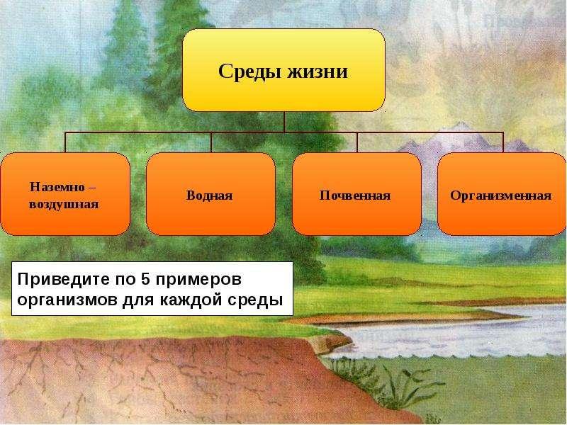 Экология. Экологические факторы среды обитания, слайд 13