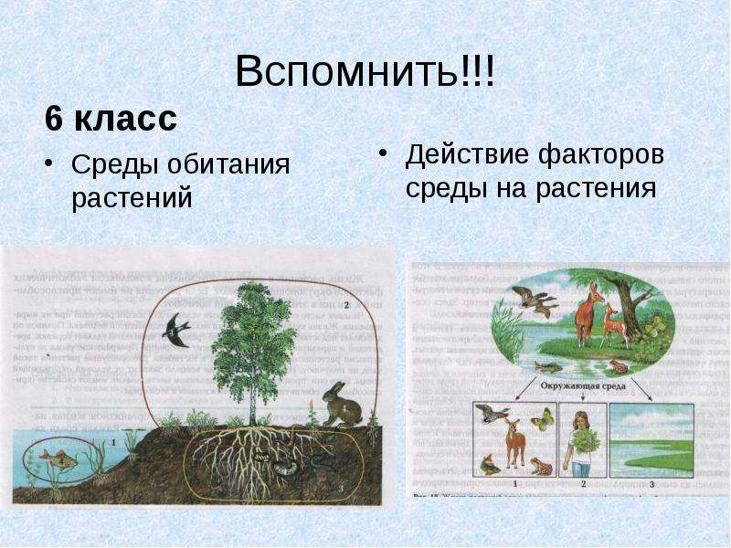 Вспомнить!!! 6 класс Среды обитания растений