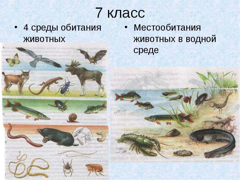 7 класс 4 среды обитания животных