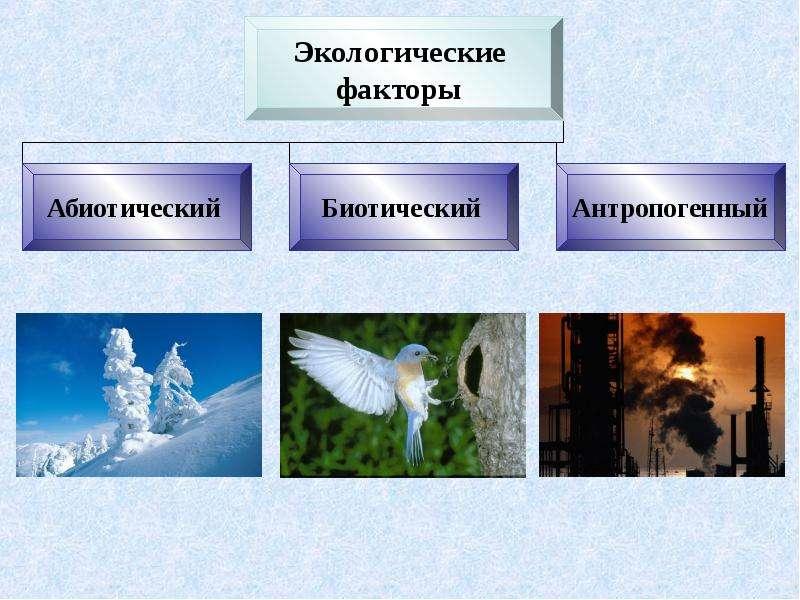 Экология. Экологические факторы среды обитания, слайд 9