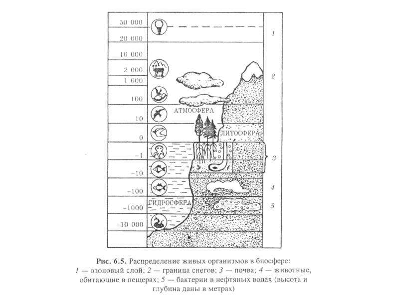 Биосфера как глобальная экосистема. Экологические проблемы биосферы, слайд 18