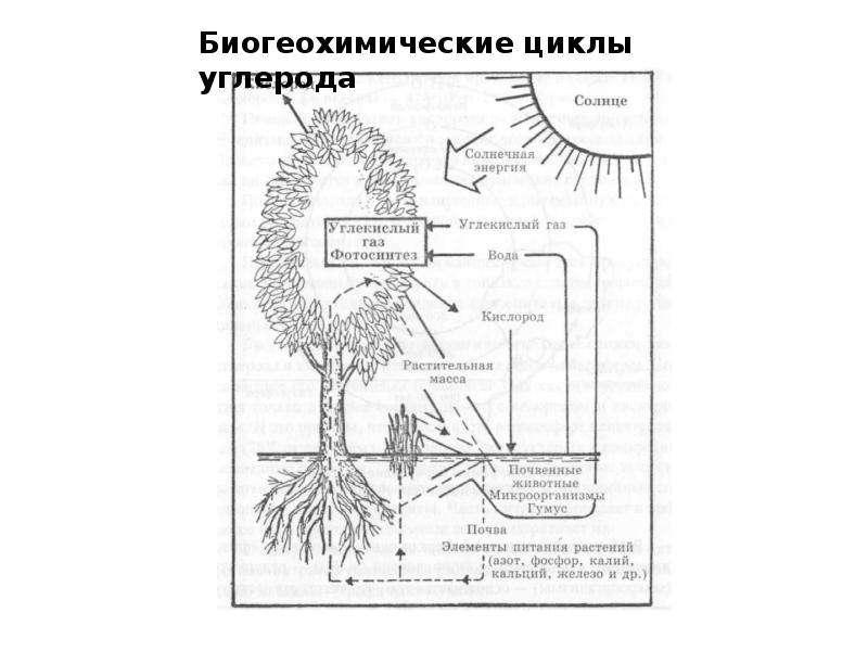 Биосфера как глобальная экосистема. Экологические проблемы биосферы, слайд 28