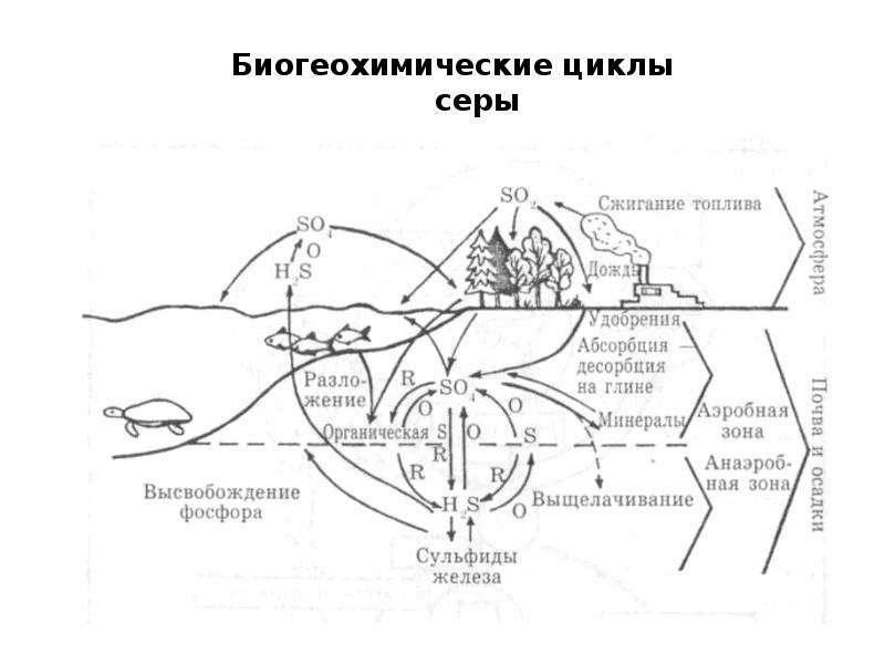 Биосфера как глобальная экосистема. Экологические проблемы биосферы, слайд 30