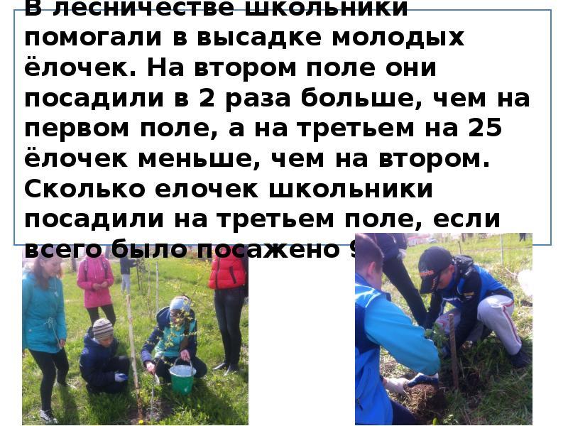 В лесничестве школьники помогали в высадке молодых ёлочек. На втором поле они посадили в 2 раза боль