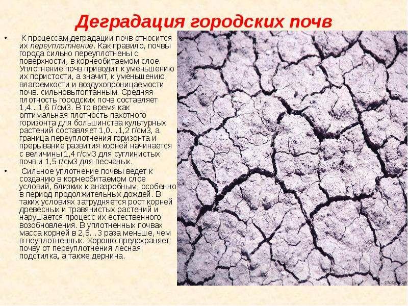 Деградация городских почв К процессам деградации почв относится их переуплотнение. Как правило, почв