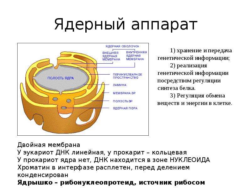 Ядерный аппарат