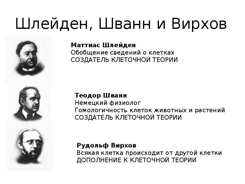 Шлейден, Шванн и Вирхов