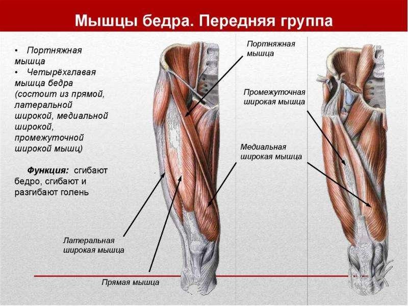 Топографическая анатомия нижней конечности, слайд 14