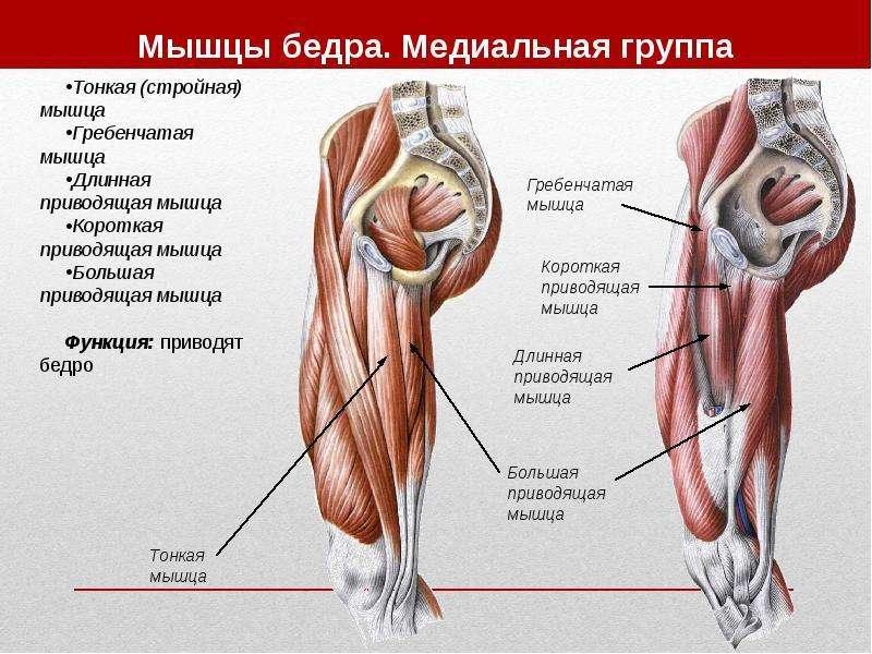 Топографическая анатомия нижней конечности, слайд 15