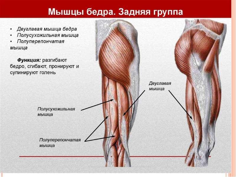 Топографическая анатомия нижней конечности, слайд 18