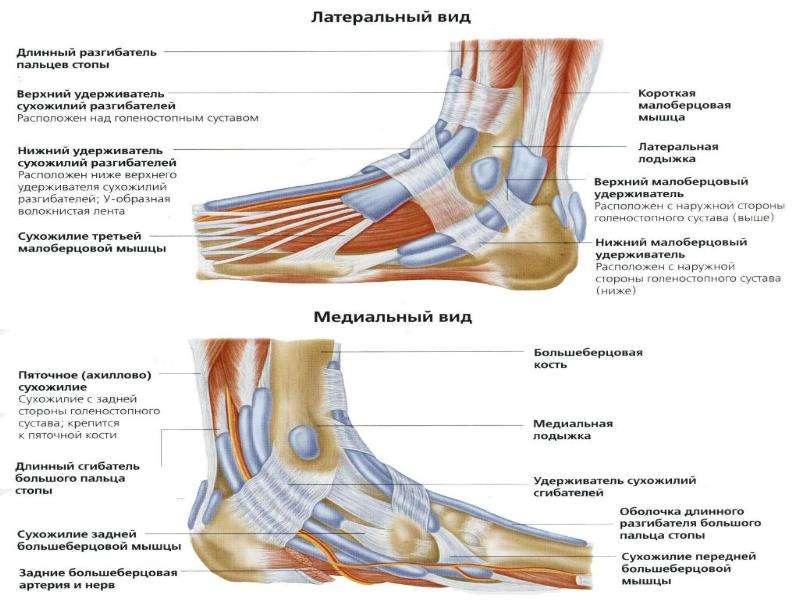 Топографическая анатомия нижней конечности, слайд 35