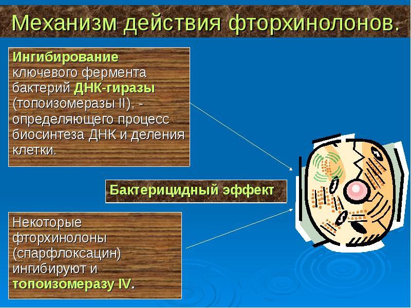 Механизм действия фторхинолонов.