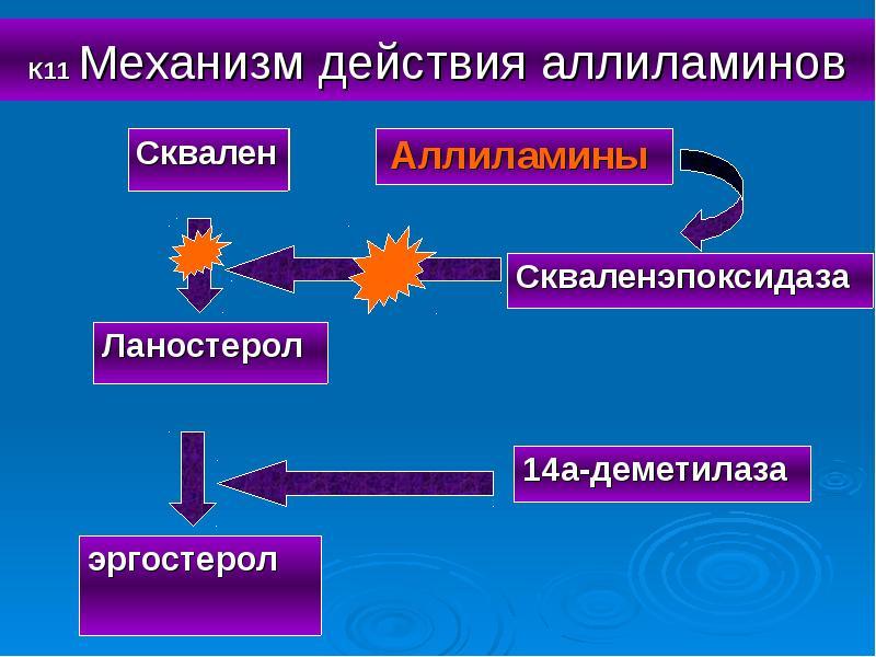 К11 Механизм действия аллиламинов