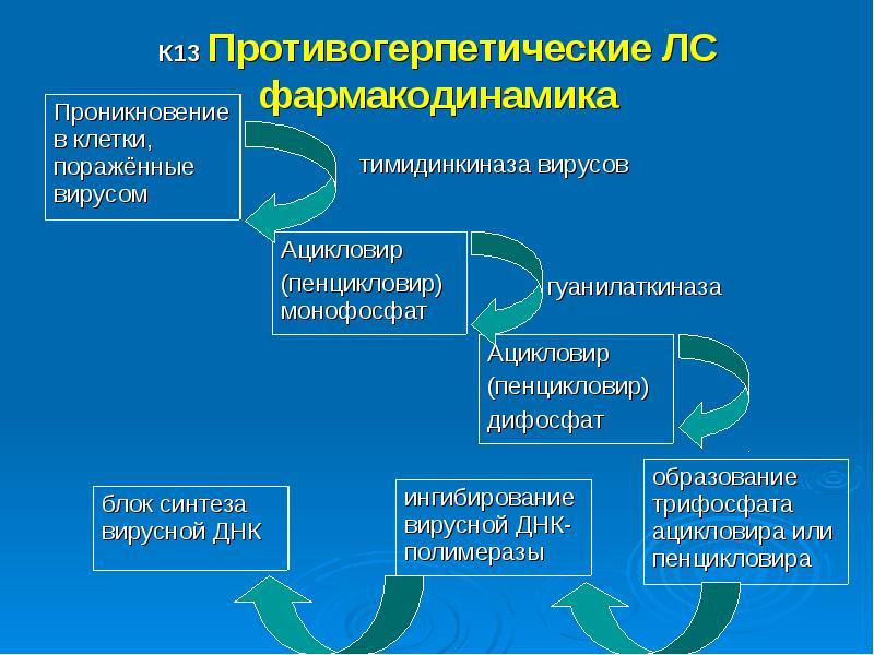 К13 Противогерпетические ЛС фармакодинамика тимидинкиназа вирусов гуанилаткиназа