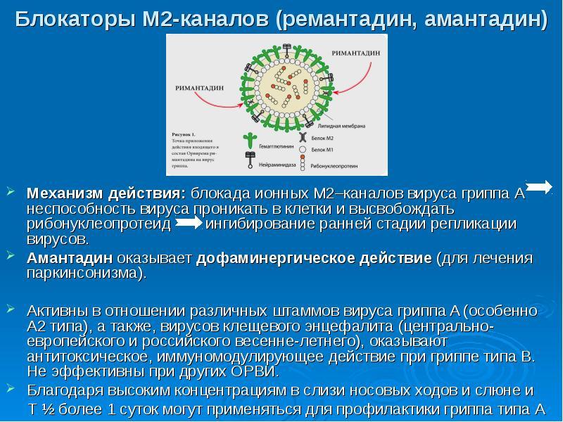 Блокаторы М2-каналов (ремантадин, амантадин) Механизм действия: блокада ионных М2–каналов вируса гри