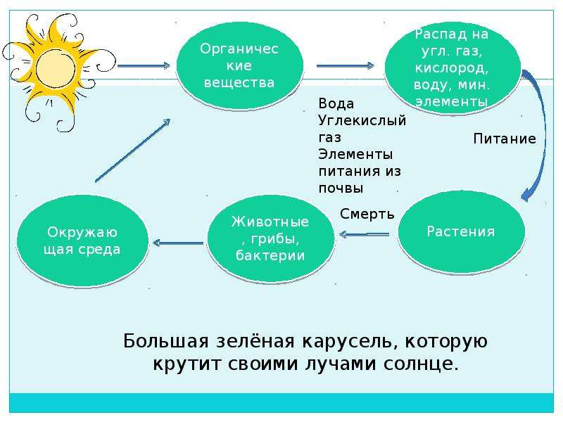 Экологическая беседа: «Зелёные карусели природы», слайд 2