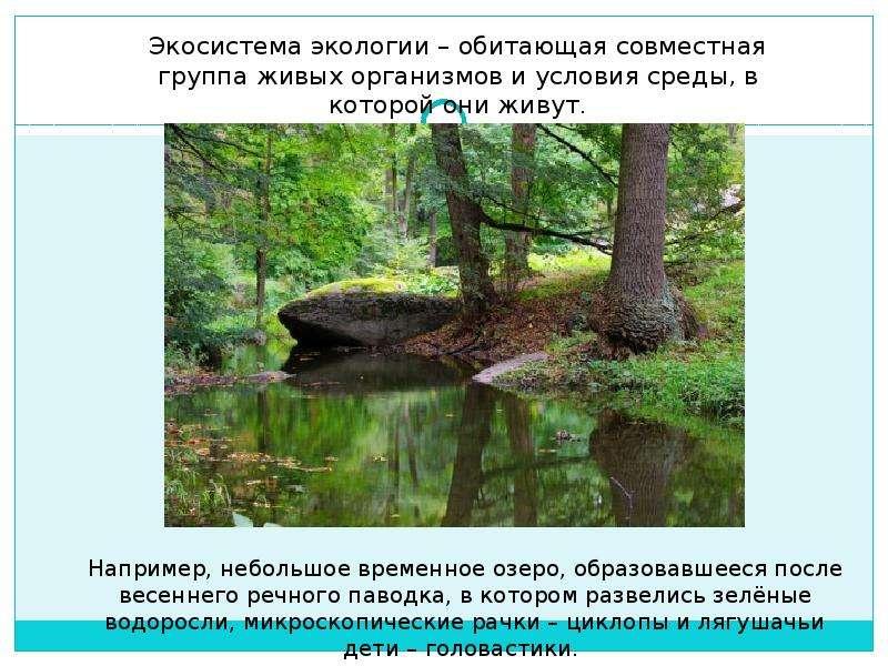 Экологическая беседа: «Зелёные карусели природы», слайд 3