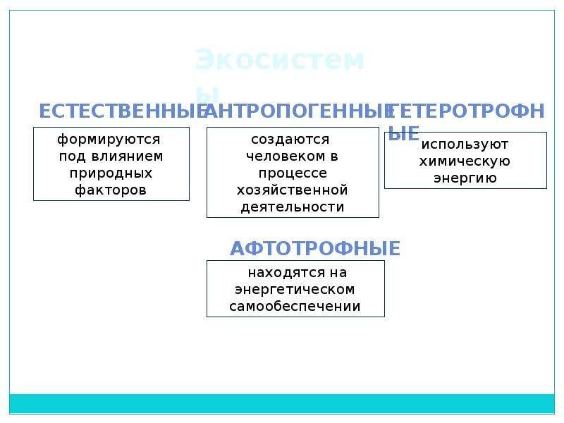Экологическая беседа: «Зелёные карусели природы», слайд 4