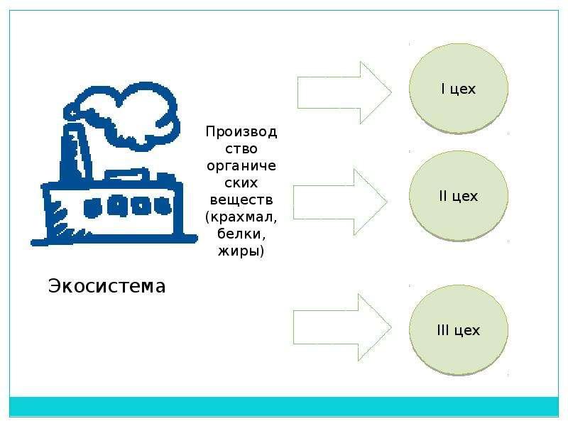 Экологическая беседа: «Зелёные карусели природы», слайд 5