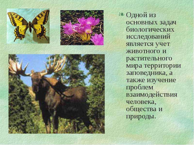Одной из основных задач биологических исследований является учет животного и растительного мира терр