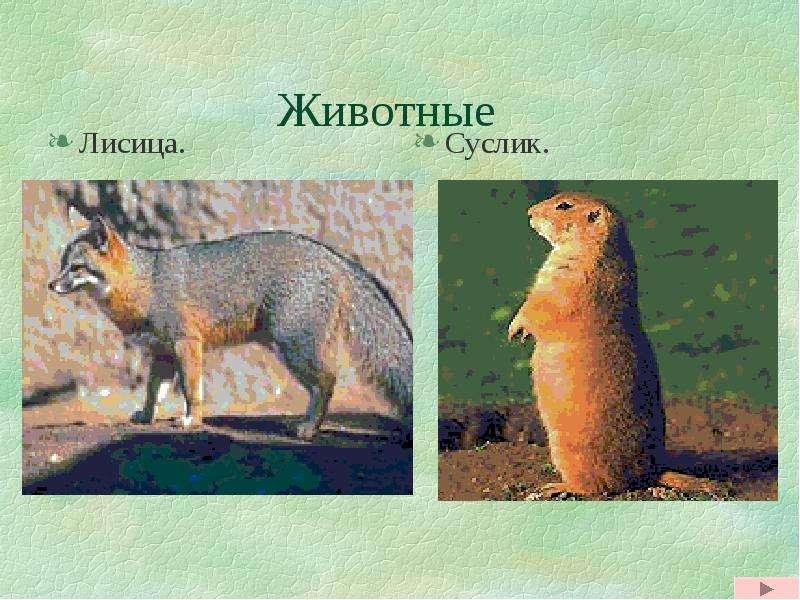 Животные Лисица.
