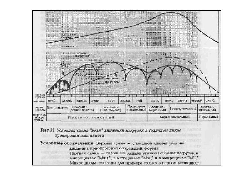 Теория и методика физического воспитания и спорта, слайд 46