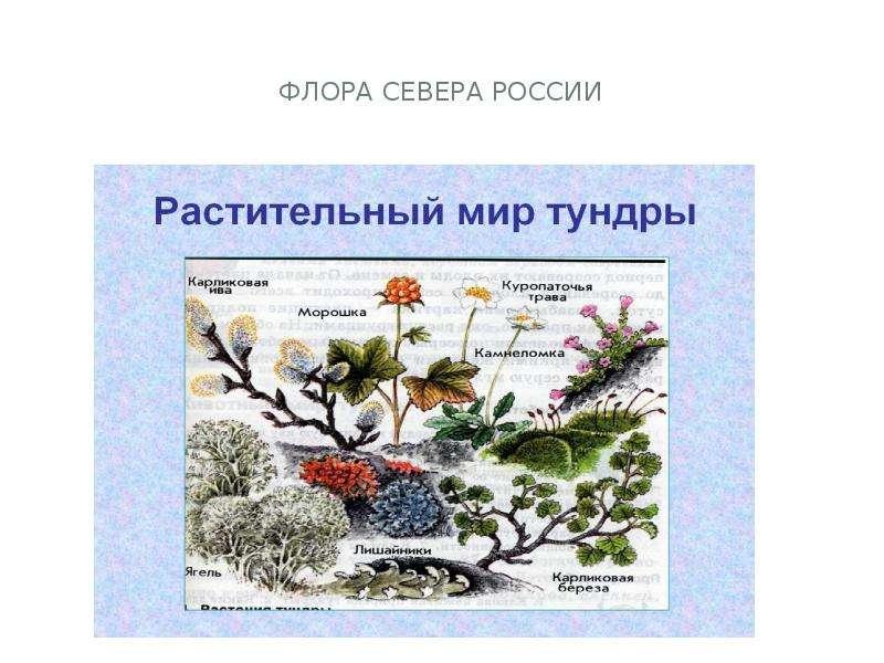 Флора севера россии