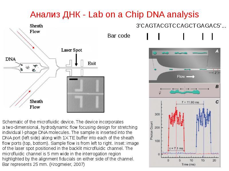 Анализ ДНК - Lab on a Chip DNA analysis
