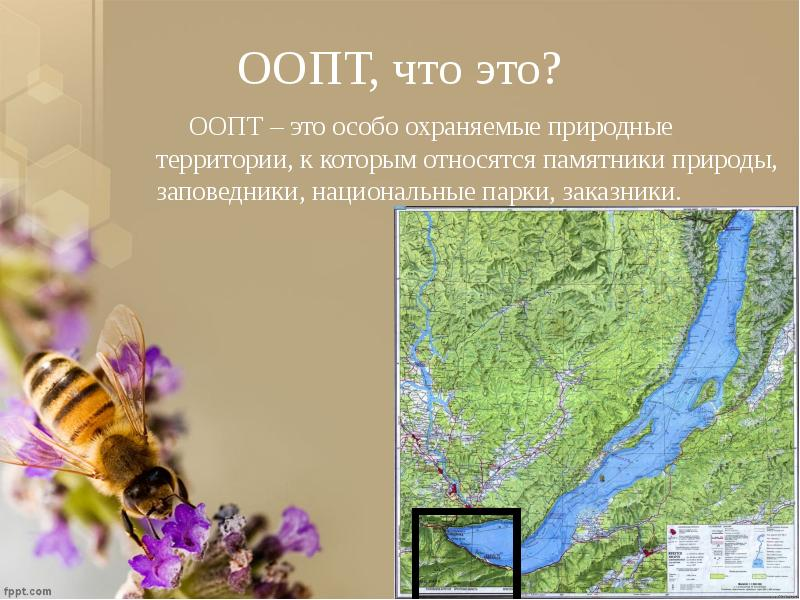 ООПТ, что это? ООПТ – это особо охраняемые природные территории, к которым относятся памятники приро
