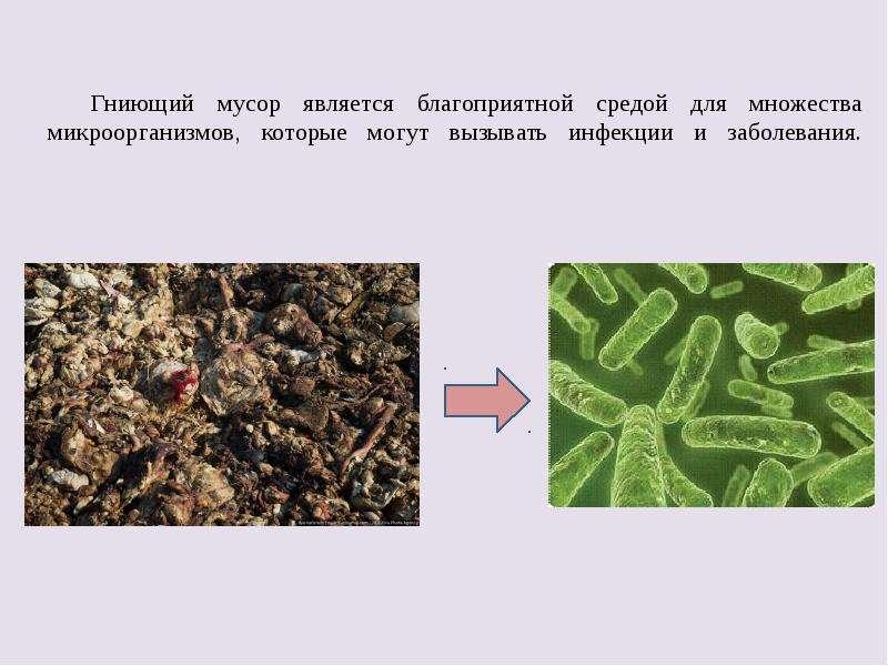 Гниющий мусор является благоприятной средой для множества микроорганизмов, которые могут вызывать ин